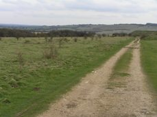 Trackway across Martin Down